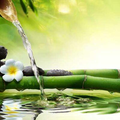 Le virtù antiaging del bambù. Dermatologia donna e cura della pelle