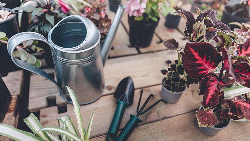 I plantfluencers. Chi sono i nuovi guru di instagram