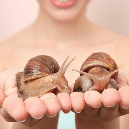 Lumache (sì lumache!) contro l'invecchiamento della pelle…