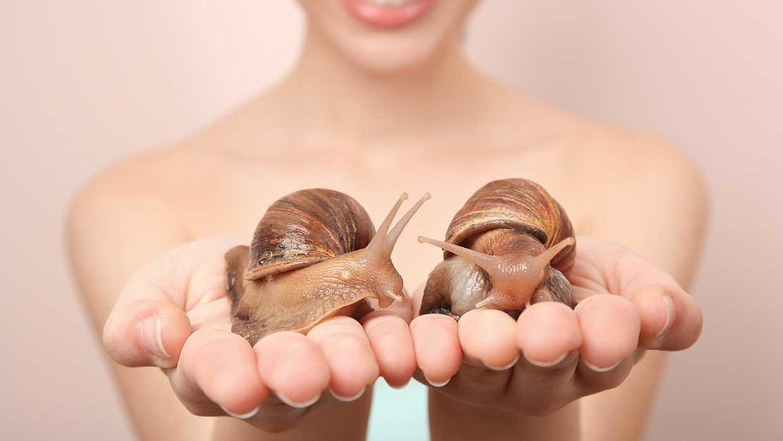 Lumache (sì lumache!) contro l'invecchiamento della pelle...