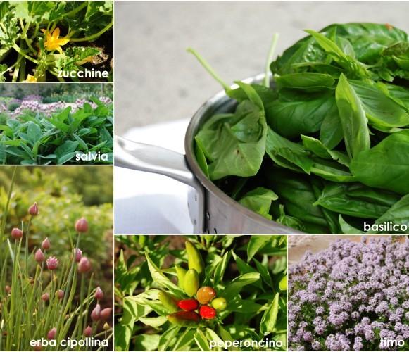 10 piante sul balcone